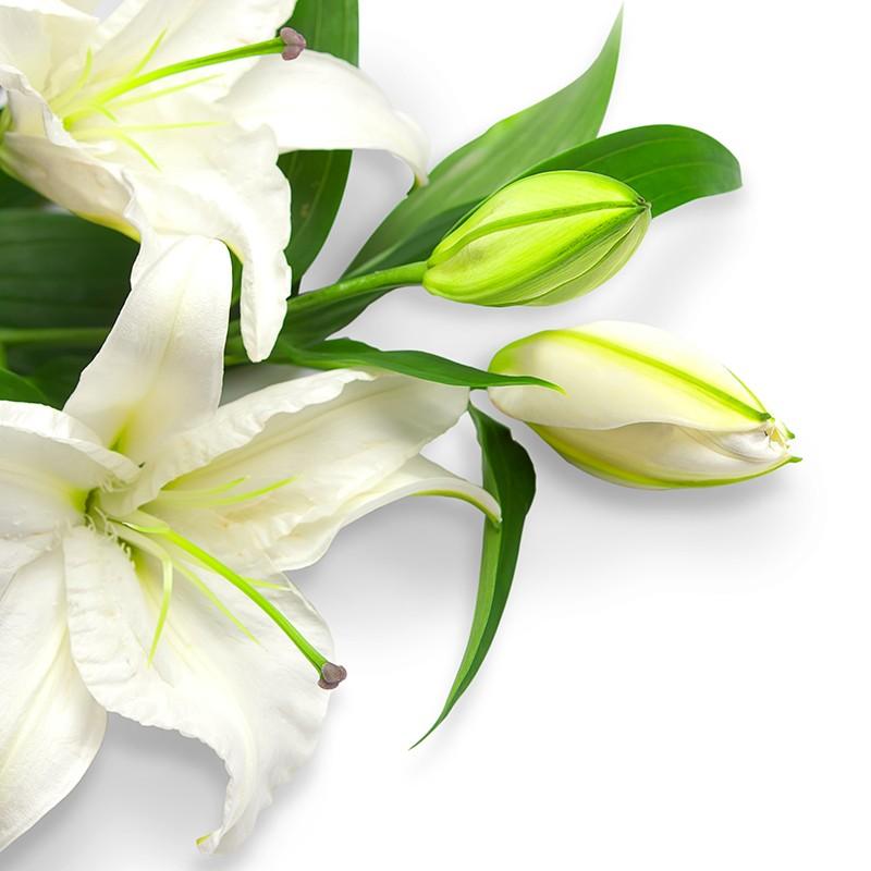Букет из 11 белых лилий